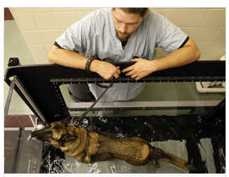 Wounded combat dogs