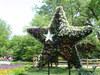 Texas_star_2